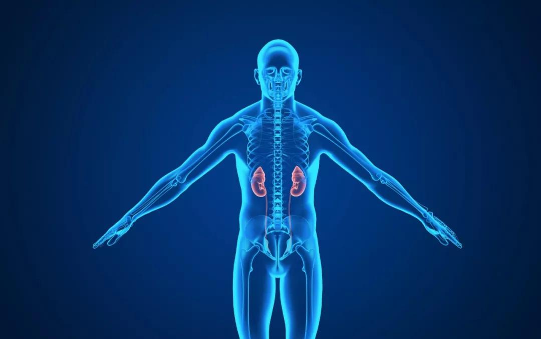 男人护肾养肾的科学方法!