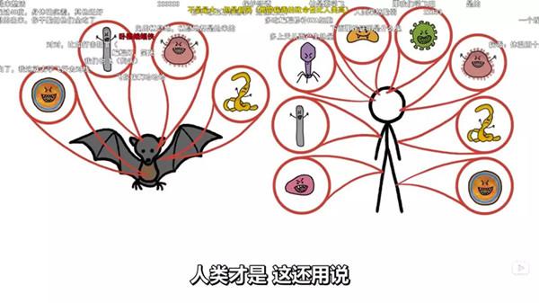"""蝙蝠与""""祸、福"""",对未知要心存敬畏!"""
