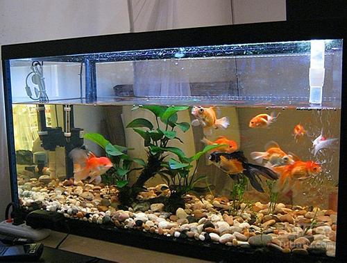 养鱼催财法,鱼缸放对位置便能财源滚滚!