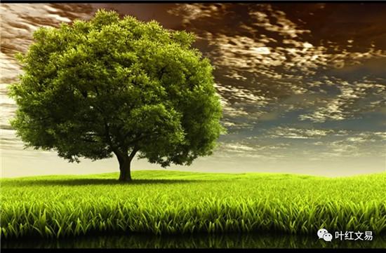 从一棵树的成长看中国